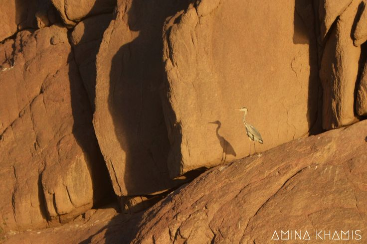 #nature #bird #shadow #copy #naturephoto #rocks #natureview #Naturereserve #photographylife #mycamera