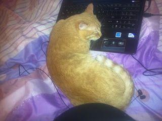 Ginger-cat love