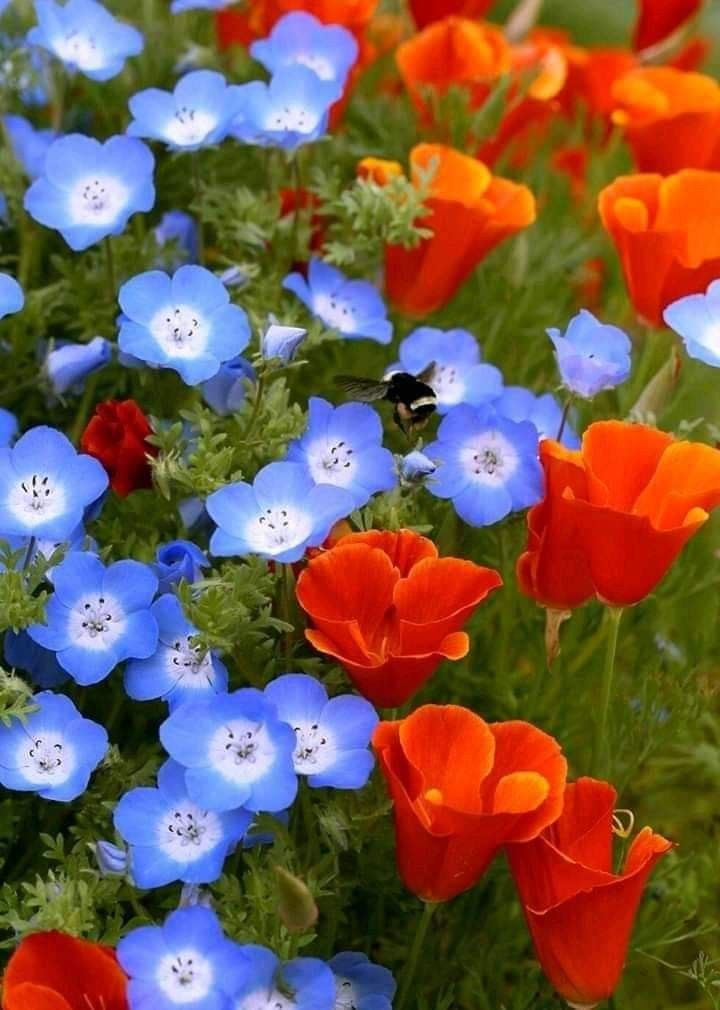 Bellflower And Blue Flowers Garden Pretty Flowers Love Flowers