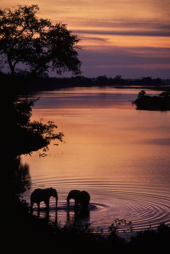 African elephants drinking at sunset, Botswana