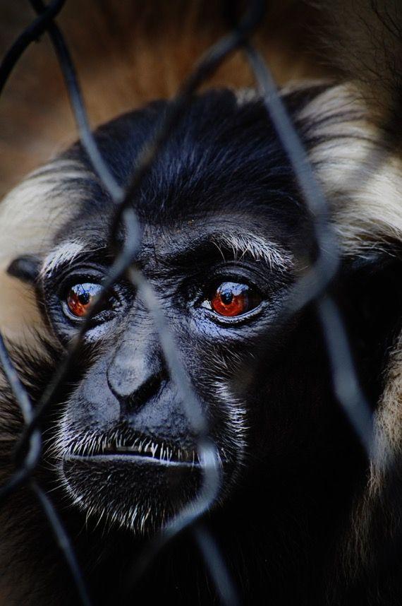 Phnom Tamao Wildlife Rescue Sanctuary