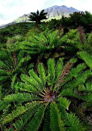 TRISTAN DA CUNHA Tristan da Cunha (en portugués Tristão da Cunha) es un archipiélago británico compuesto por tres islas y algunos islotes: Tristan da Cunha, la mayor y que da nombre al grupo con una población de 275 habitantes (2009), y las deshabitadas Inaccessible y Nightingale. Leer más: http://www.navegar-es-preciso.com/news/tristan-da-cunha/