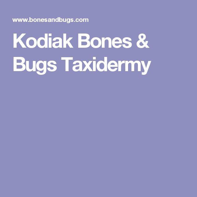 Kodiak Bones & Bugs Taxidermy