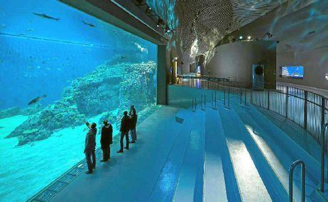 ... oceanarium on Pinterest Aquarium, Exhibit design and Puerto rico