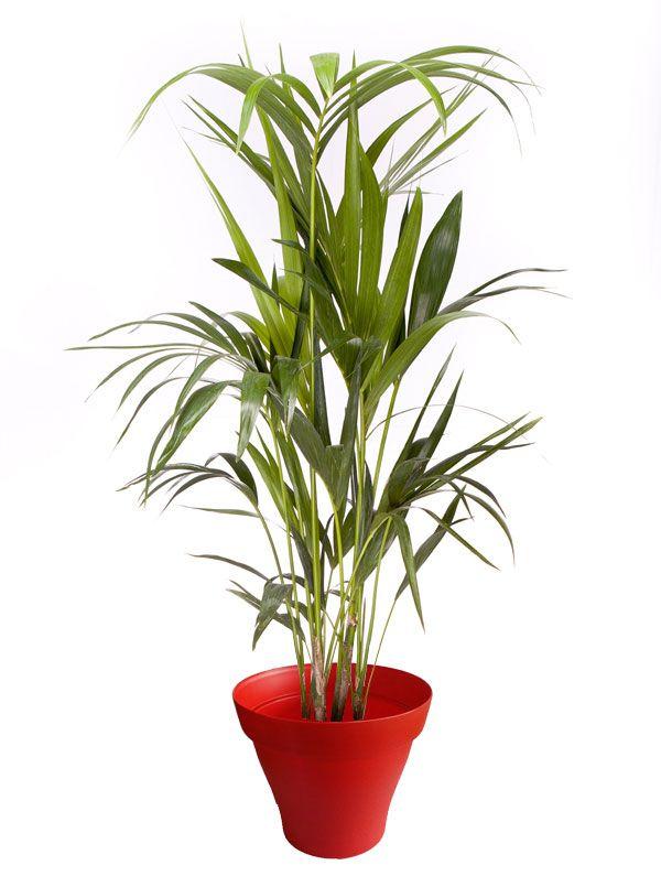 Les 89 meilleures images du tableau plantes d 39 int rieur for Magasin plante interieur