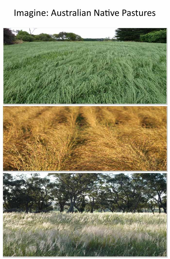 Native pasture grass - Buy pasture grass or get a free quote today - Native Seeds