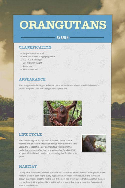 Orangutans by Ben H