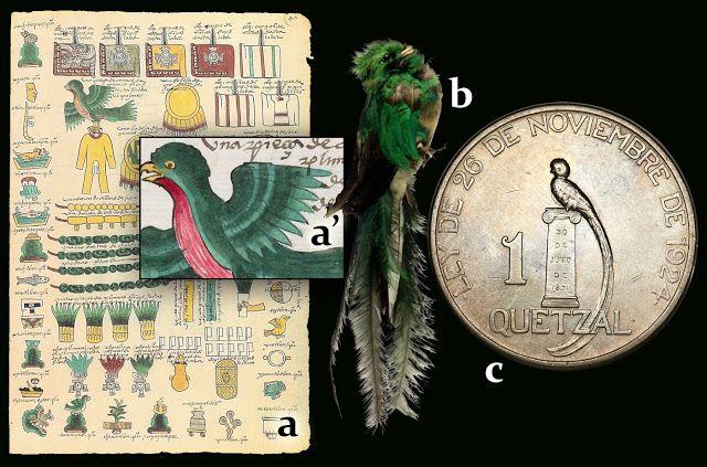 """Numisarchives. Primitive money. Feather money: a: Detalle del Quetzal en el """"Códice Mendoza""""; b: Ejemplar disecado del Museo de América (Madrid); c: Moneda de un """"quetzal"""" de Guatemala."""