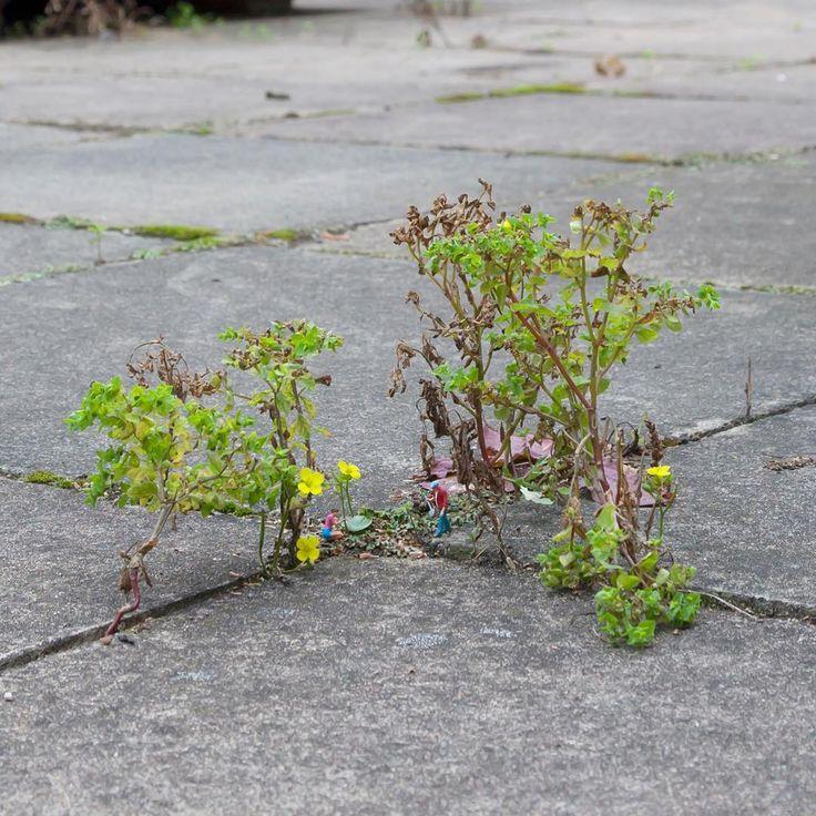 """Entre plantas que crescem nas calçadas ou entre pequenas pilhas de lixo, desde 2006, o artista Slinkachu """"abandona"""" pessoas pequeninas nas ruas. Trata-se de intervenções urbanas em mini…"""