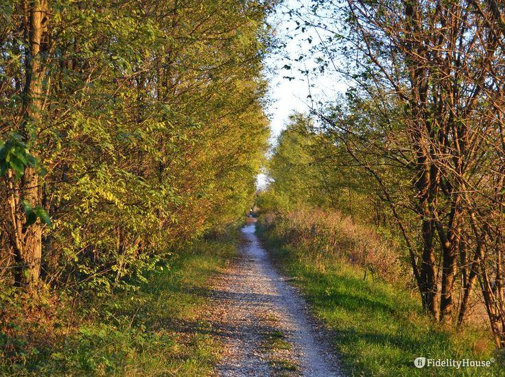 Bellissimo il paesaggio naturale che costeggia il fiume Brenta.