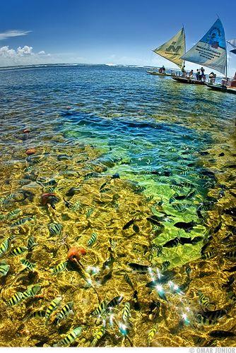 Piscinas naturais de Porto de Galinhas, Ipojuca, estado de Pernambuco, Brasil. Durante a maré baixa, formam-se piscinas naturais entre os recifes de corais, onde se abrigam muitos peixes, que nadam e se alimentam tranquilamente. Podem ser vistos a olho nu, podendo-se chegar às piscinas à pé (cuidado com os pés), nadando ou com jangadas. É o ambiente perfeito para a prática de mergulho, e um local inesquecível.