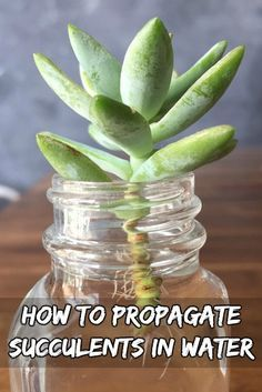 Tips on How to propagate succulents from leaves! See how to grow more succulents from the ones you already own!