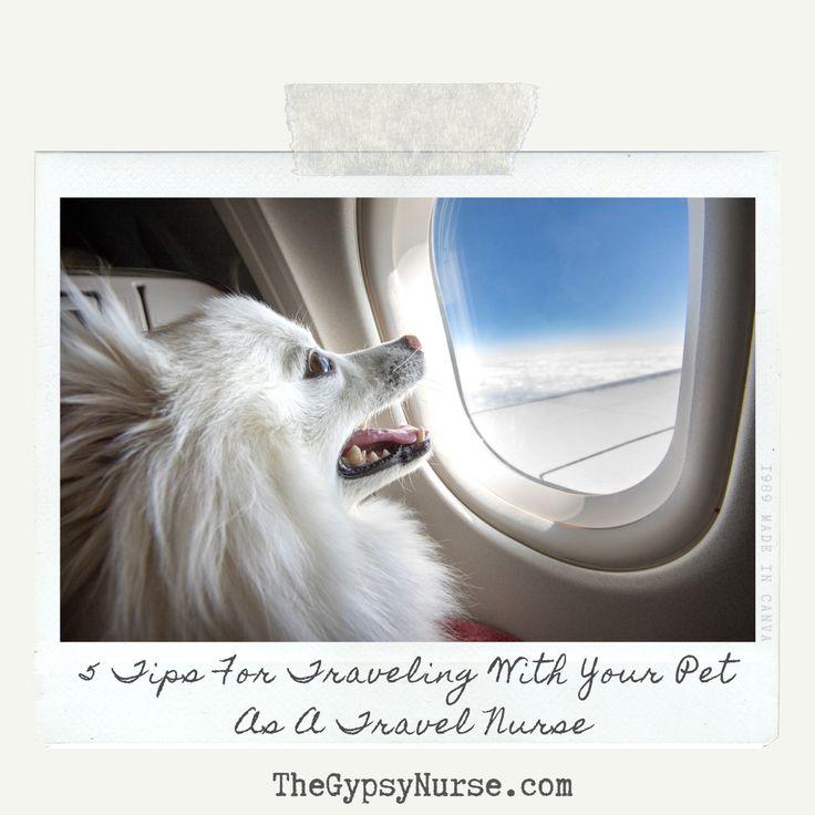 580 Thegypsynurse Com Ideas Travel Nursing Travel Nurse