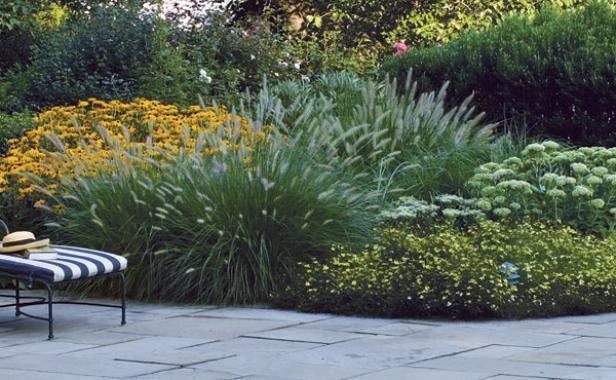 Rudbeckia Fulgida Fountain Grass Coreopsis Quot Moonbeam