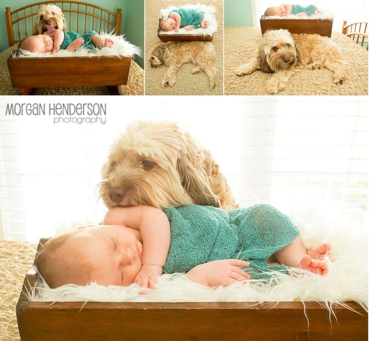 24 Newborns Who Had To Share The Spotlight At Their First Photo Shoot