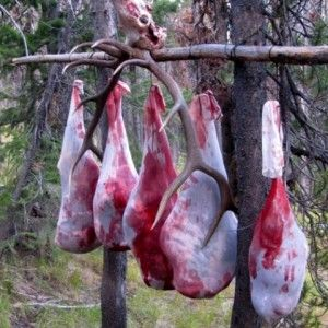 Gutting & Quartering Basics | Elk101.com | Eat. Sleep. Hunt Elk.