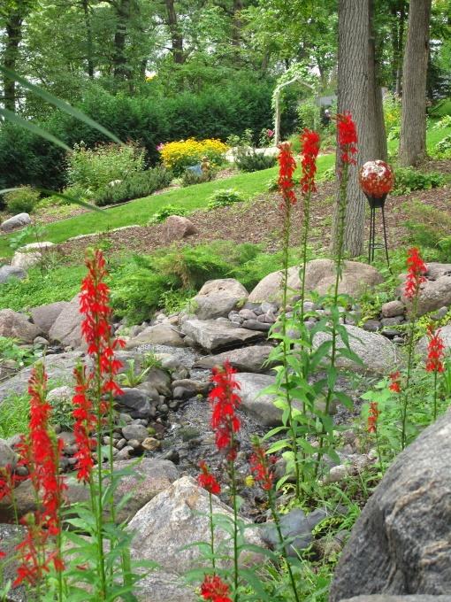31 best images about minnesota native plants on pinterest for Native pond plants
