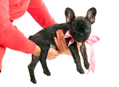 #Petiquette 101 - Things to consider before giving a #pet as a #gift