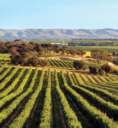 McLaren Vale vineyards and Willunga Hills in the distance | Bekkers Wine via Woodley Lane #mclarenvale #vineyards #southaustralia
