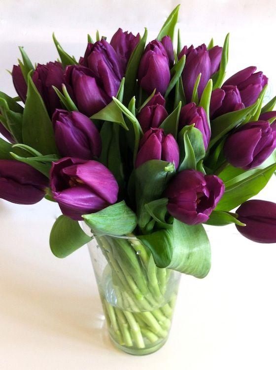lila tulipán - Google keresés