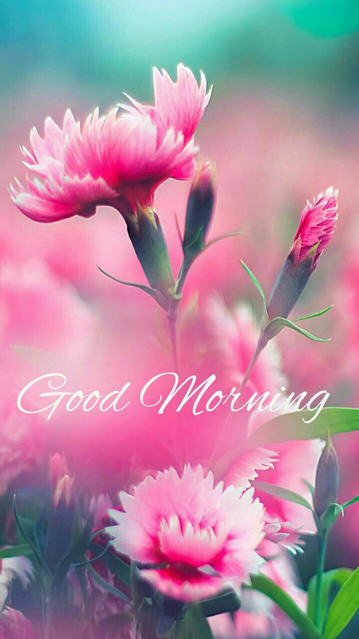 Good Morning With Images Beautiful Flowers
