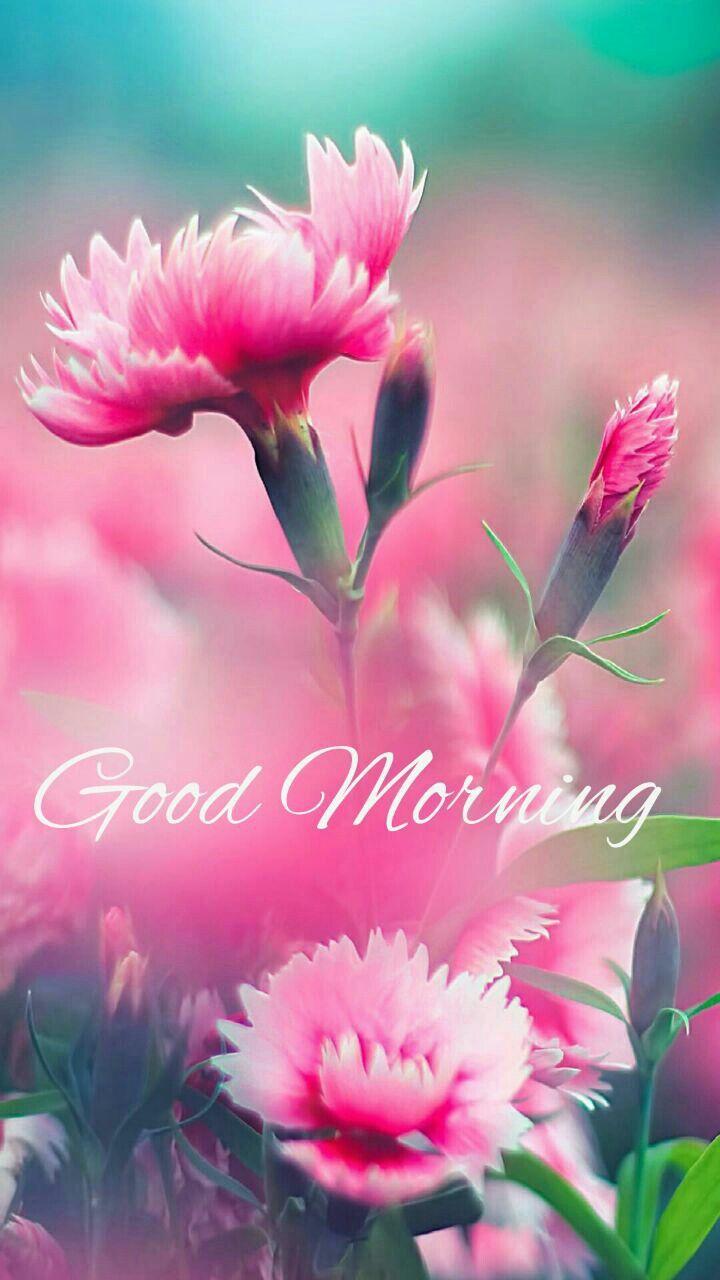Good Morning | Pink flowers, Beautiful flowers, Pretty flowers