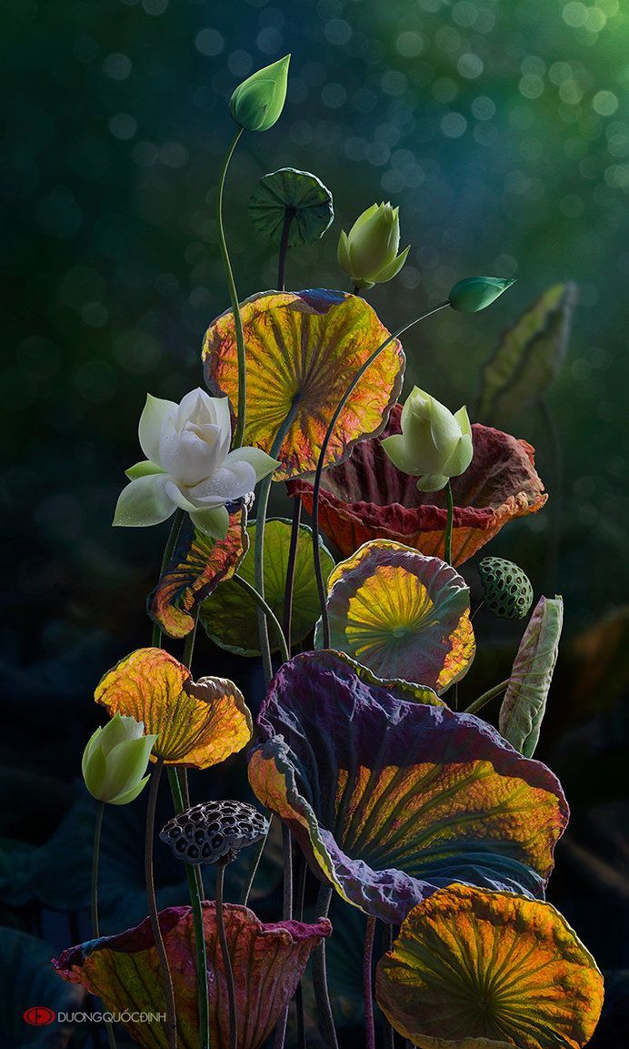~~Exotic Flowers 2016 by duongquocdinh~~