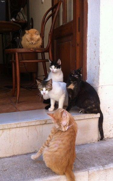 Cats in Corfu Town