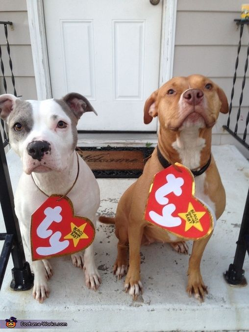Beanie Babies Costume! How cute are these DIY dog costumes for these  pitbulls As a dog mom d0d74cf91a31