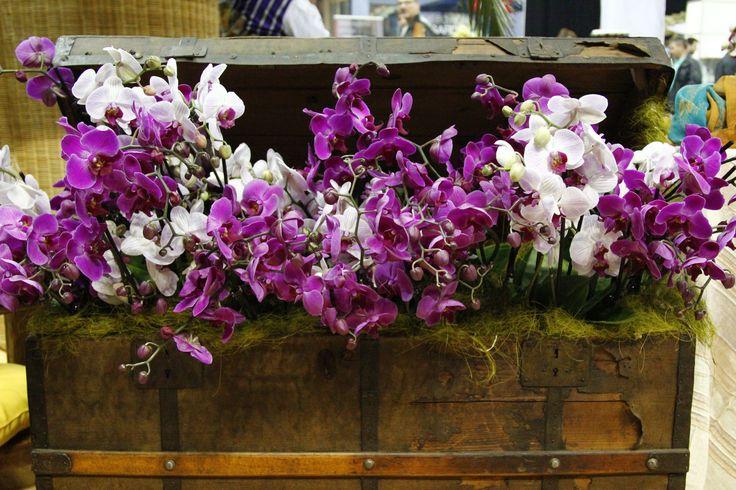 Orchidea növény kert