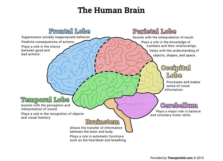 871 best brain images on pinterest the brain neurology and addiction and the human brain ccuart Images
