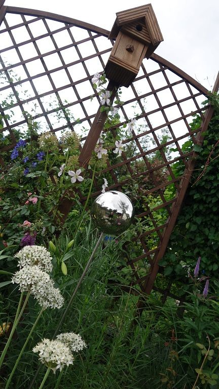allium nigrum, delphinium, miskanthus, clematis White Prince Charles, birdhouse and silver ball  in garden