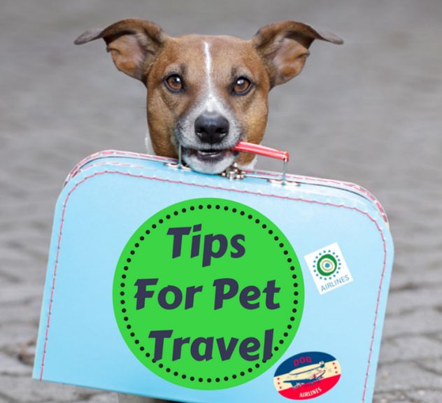 what some tips traveling with pets greyhound