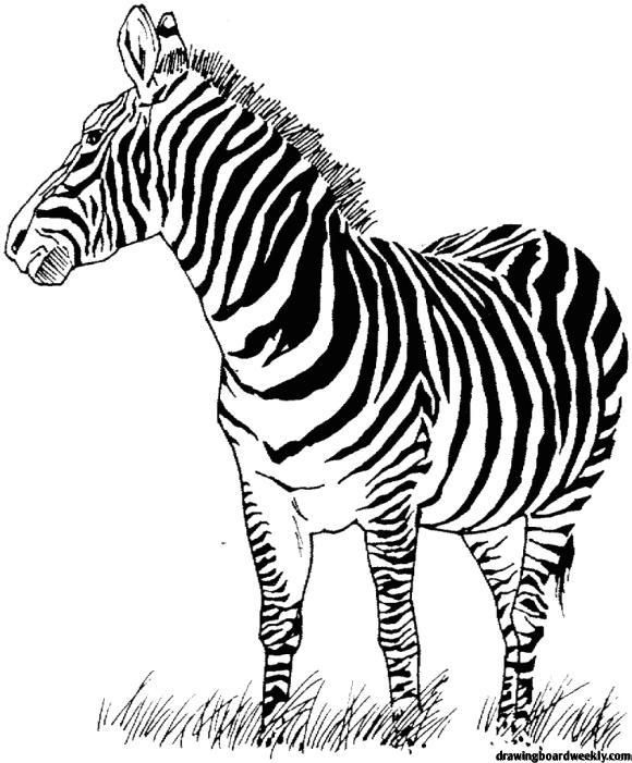 Zebra Coloring Page Zebra Coloring Pages Animal Coloring Pages Coloring Pages