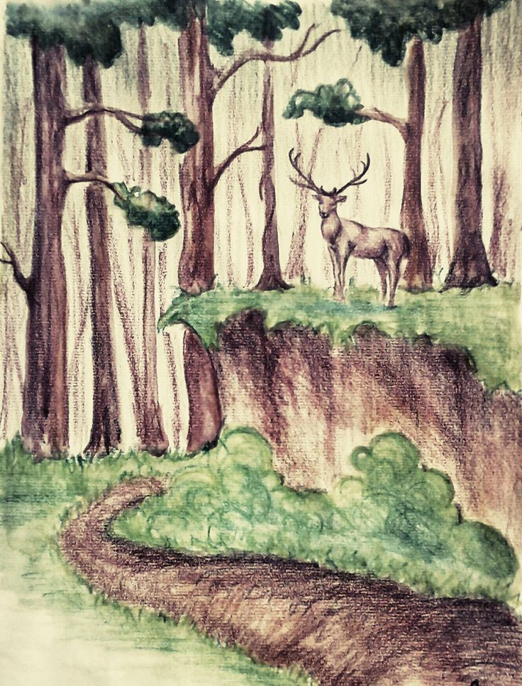 A3 - the forest