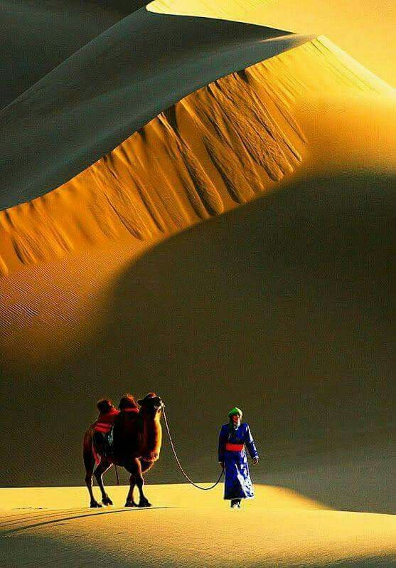 Desert life. ~ETS