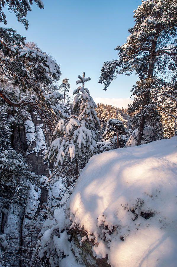 Snow In Saxon Switzerland by Jenny Rainbow