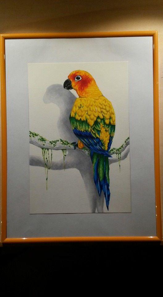 Sonnensittich Papagei Copic