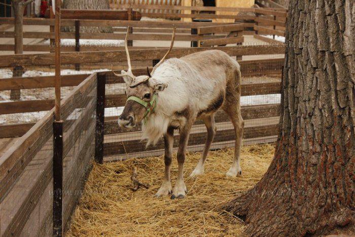 """В зоопарке """"Крошка енот"""" состоялась благотворительная акция для детей с ограниченными возможностями    http://nversia.ru/news/view/id/100715 #Саратов #СаратовLife"""