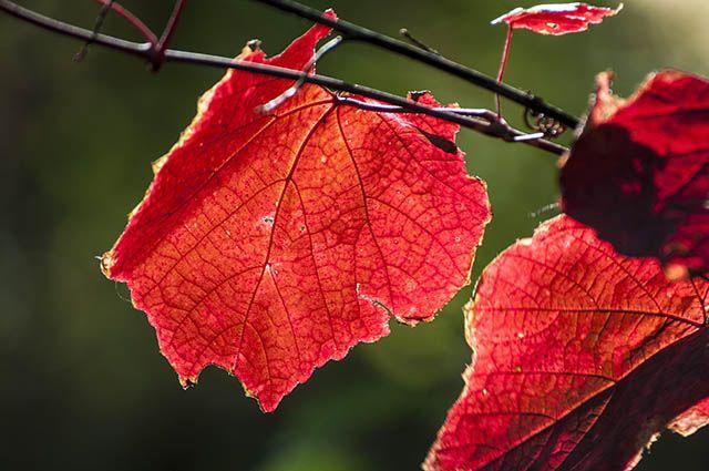 Осенний лес, конец сентября, красота осеннего леса в тихие солнечные дни