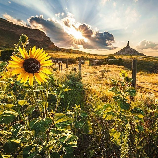 Sunset at Chimney Rock, Nebraska, by (at)onelapse. Love the sunflower, sun and…