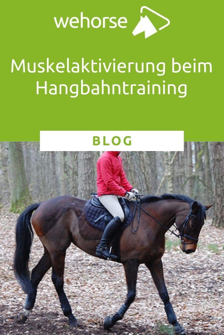 Bergauf Und Bergab Zu Fahren Sorgt Nicht Nur Fur Ein Abwechslungsreiches Training Sondern Auch Fur Muskela Muskelaufbau Pferd Training Pferde Training