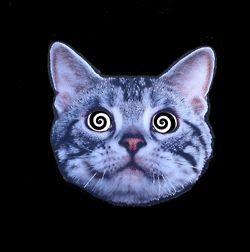 gif trippy drugs lsd acid psychedelic cat gif psychonauts
