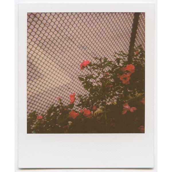 Photo Diary Summer Color Theory featuring Impossible Project ❤ liked on Polyvore featuring backgrounds and filler