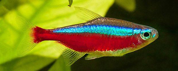 145 Beste Afbeeldingen Over The Colors Of Creation Birds