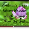 Gratitude – The Gift of Today