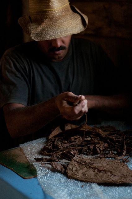 Man rolling cigars in Vinales, Cuba.