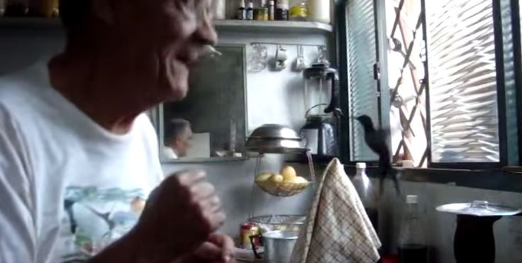 This old man in Brazil is visited every morning by an intrepid hummingbird - Lost At E Minor: For creative people
