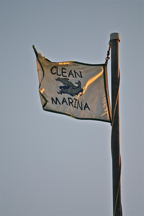 Clean Marina - Morro Bay CA Card: $5.70, art prints available. #photography #ocean #flags #dolphins #sunsetMorro Bay