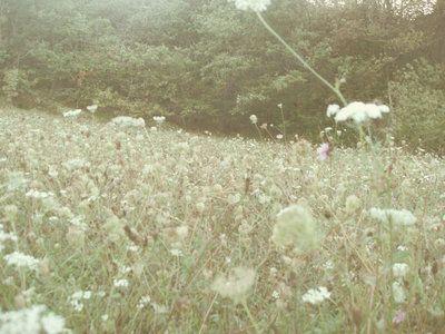 Fairytales by lotus82.deviantart.com on @deviantART | © Laura Silvestri